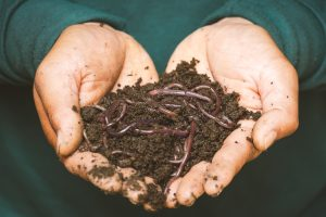 A handful of worms covered in mud